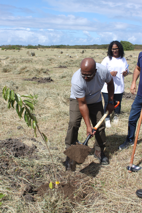 All Barbadians, visitors can take part in tree planting ...