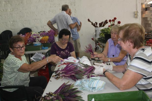(From left to right) Frances Chandler, Maureen Marshall, Anne Cave and Valerie Hutchinson preparing the plants for packing. INSET: Marcia Powlett trimming off the excess leaves off the plants prior to packaging.