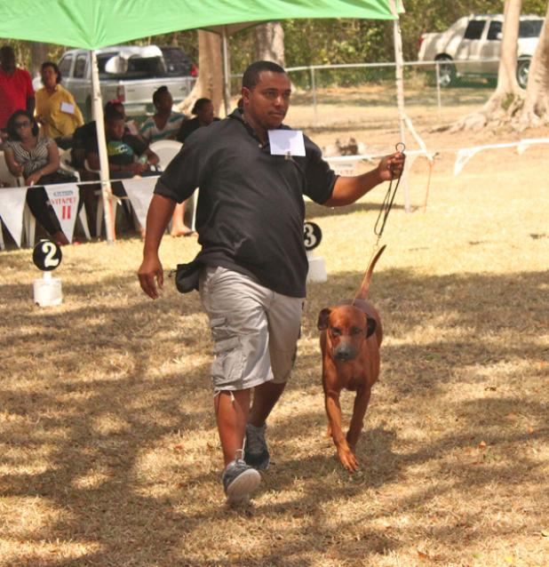Oneal Holder's Spike took a clean sweep as the Open Class winner, Best in Breed and Best Locally-Bred for Rhodesian Ridgebacks.